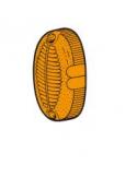 trasparente laterale arancio