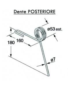 Dente Posteriore